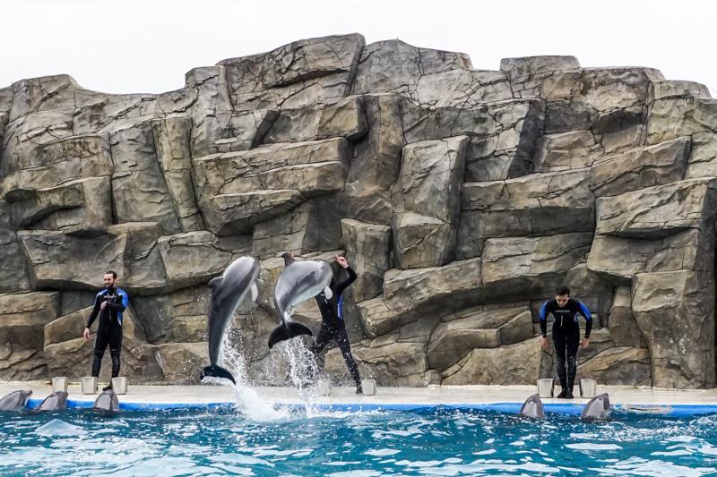 جاذبه های گردشگری باتومی - دلفین آریوم در پارک 6 می باتومی