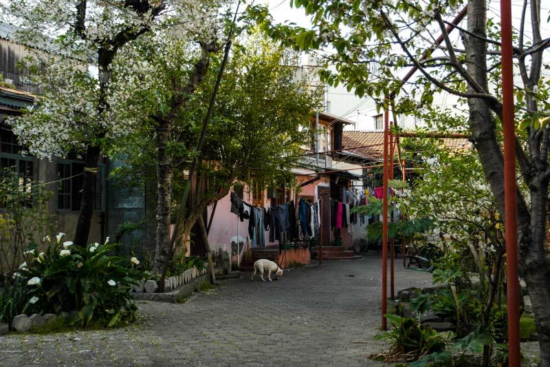 شهر باتومی