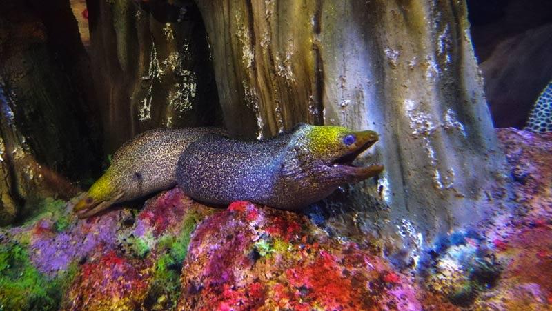 مار ماهی در آکواریوم بندر انزلی